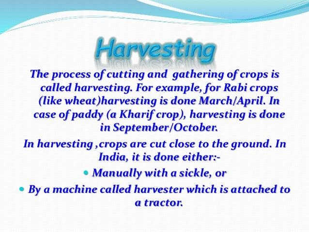 Crop Production & Management