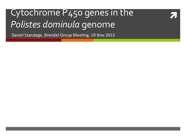 Cytochrome P450 genes in the Polistes dominula genome Daniel Standage, Brendel Group Meeting, 19 Nov 2013  