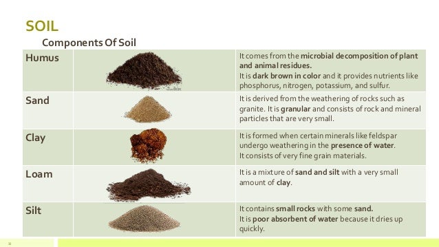 soil and soil components Figure 1 soil is composed of a matrix of minerals, organic matter, air, and water each component is important for supporting plant growth, microbial communities, and.