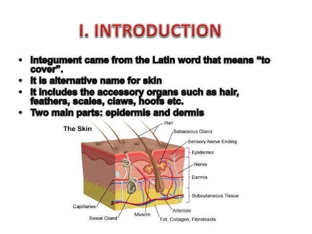 Comparative Anatomy Integumentary System