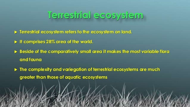 A Brief Presentation On Terrestrial Ecosystem