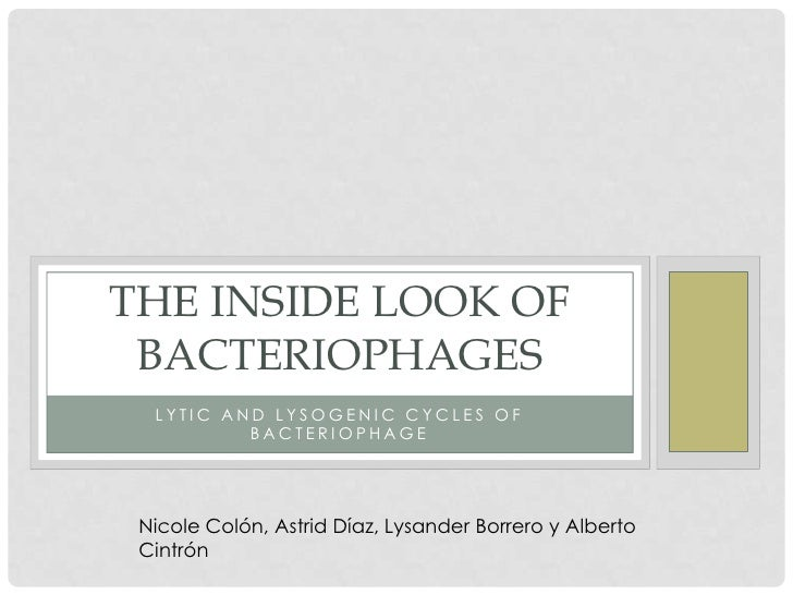 THE INSIDE LOOK OF BACTERIOPHAGES  LYTIC AND LYSOGENIC CYCLES OF          BACTERIOPHAGE Nicole Colón, Astrid Díaz, Lysande...