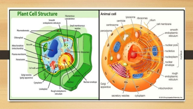 Cell the function and structural unit of life class 8th 12 13 ccuart Gallery