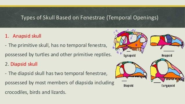 Comparative Anatomy - Skeletal System