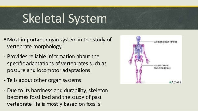 Comparative Anatomy Skeletal System – Comparative Anatomy Worksheet