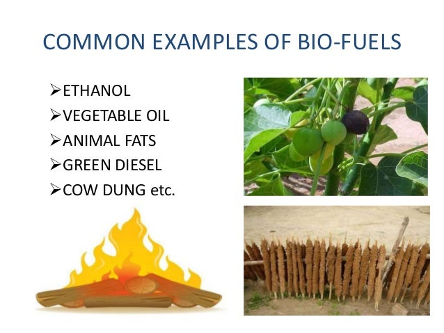 biomass energy and biofuels essay Biomass energy and biofuels essay biomass energy and biofuels: an overview gefei liu the ohio state university biomass energy and biofuels: an overview thanks to the industrial revolution that made it possible for exponential economic growth, human beings are currently living in an era characterized by the staggering amount of annual energy.