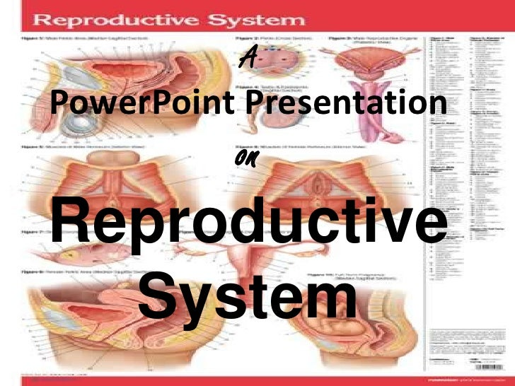 Group 4 Reproductive System