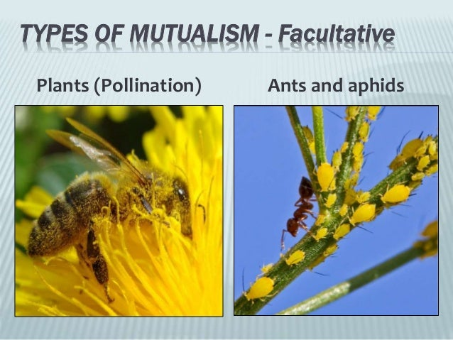 Relationship in Nature: Activities of Man (Powerpoint)