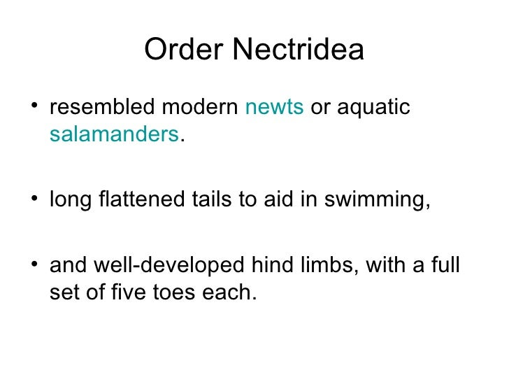 Order Microsauria•   short tails and small legs•   group included lizard-like animals that were relatively well-adapted   ...
