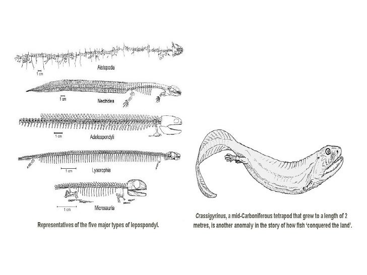 Group 5   amphibia
