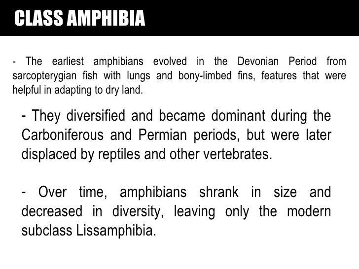 SUPERCLASS LABYRINTHODONTIA→ Ichthyostegalia—primitive ancestral forms Late Devonian only.→ Temnospondyli—common, small to...