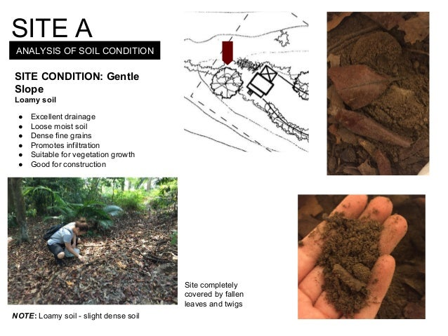 ANALYSIS OF SOIL CONDITION SITE A SITE CONDITION: Gentle Slope Loamy soil ● Excellent drainage ● Loose moist soil ● Dense ...