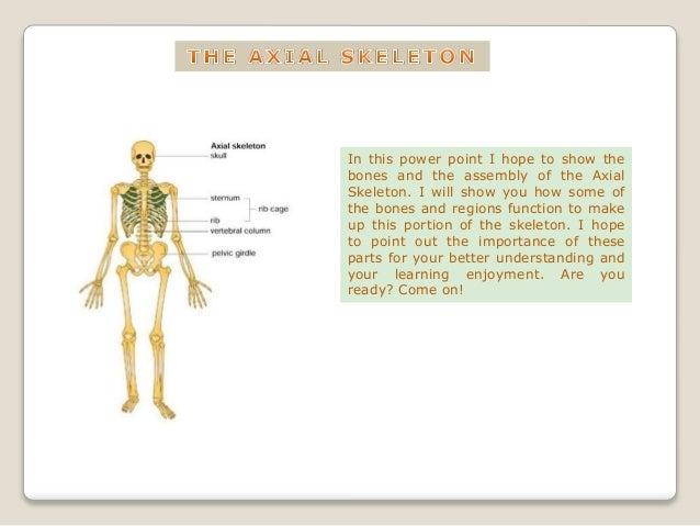 The Axial Skeleton Appendicular Skeleton
