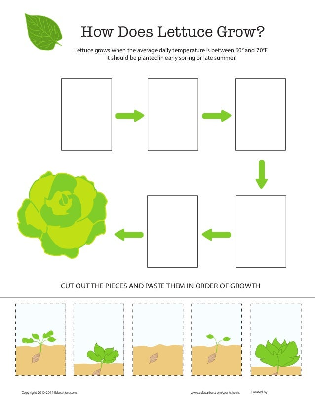 Grow lettuce test how does lettuce grow copyright 2010 2011 education education ccuart Image collections