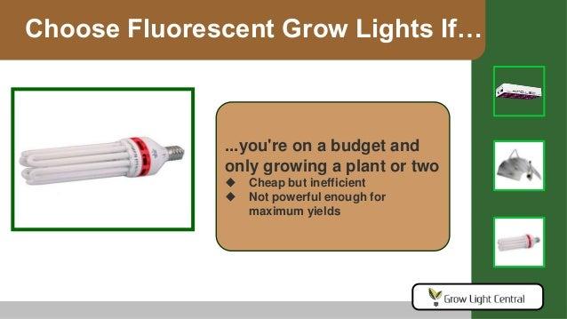 Grow Light Buying Guide