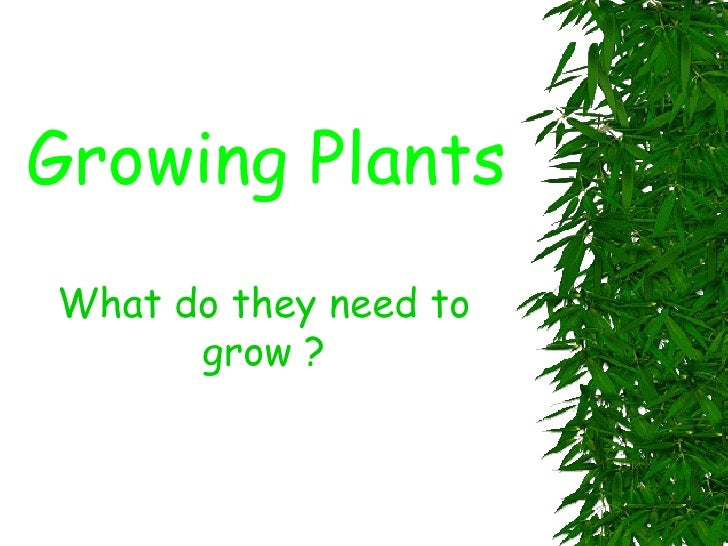 Growing Plants What do they need to grow ?