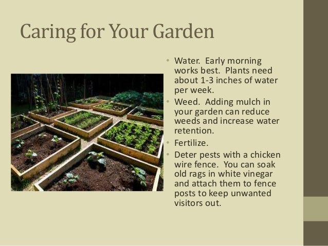Growing and Preserving Your Own Fruits and Vegetables
