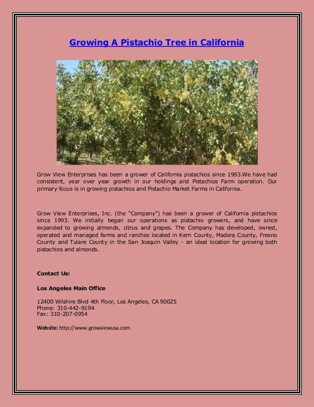 Growing Pistachios: Growing A Pistachio Tree In California