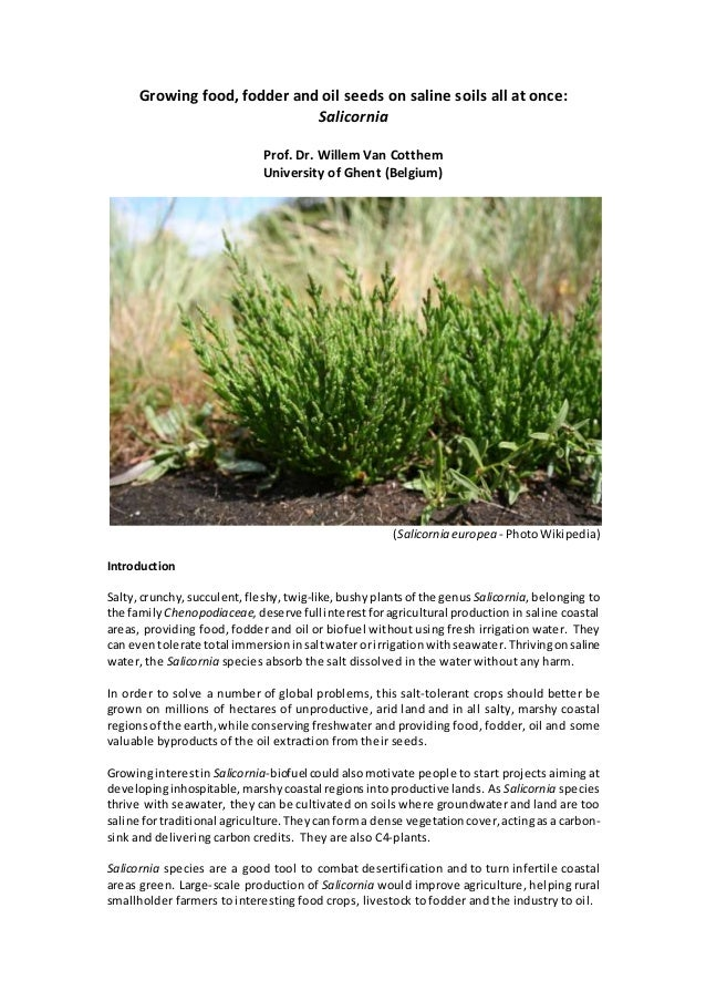 Growing food, fodder and oil seeds on saline soils all at once: Salicornia Prof. Dr. Willem Van Cotthem University of Ghen...