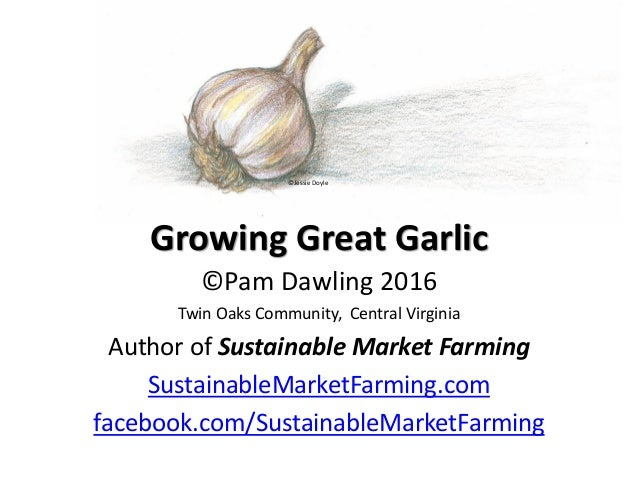 Growing Great Garlic ©Pam Dawling 2016 Twin Oaks Community, Central Virginia Author of Sustainable Market Farming Sustaina...