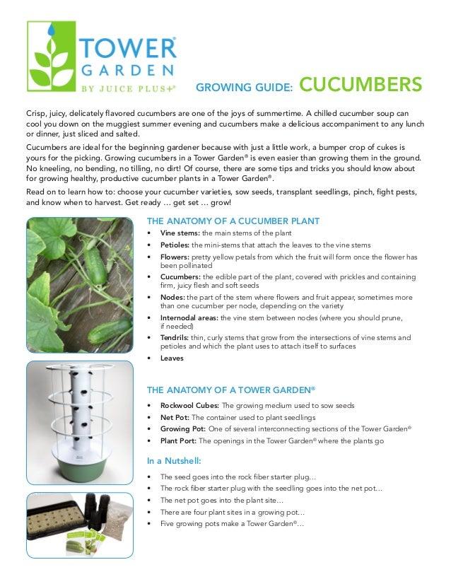 Growing Guide Cucumbers