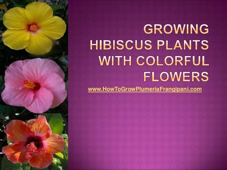 www.HowToGrowPlumeriaFrangipani.com