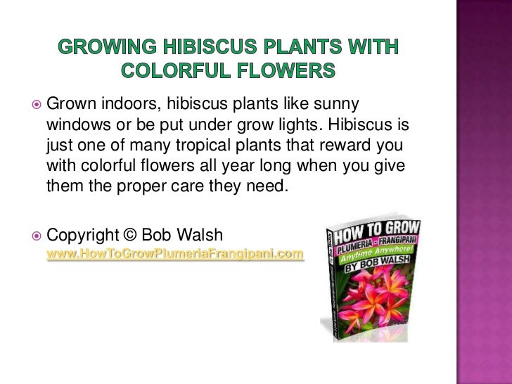 Growing Hibiscus Plants With Colorful Flowers