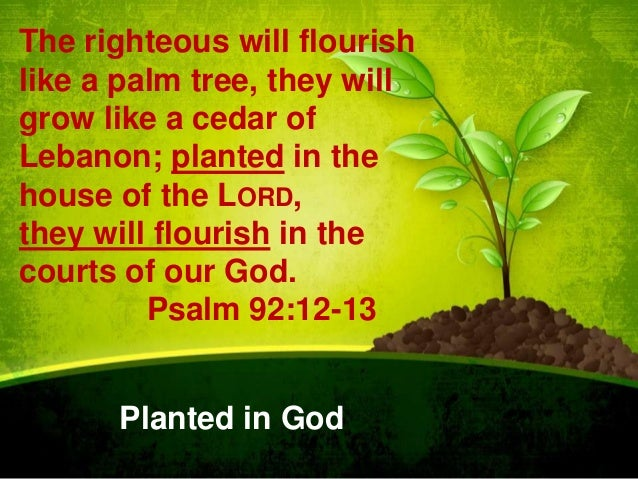 The righteous will flourish like a palm tree, they will grow like a cedar of Lebanon; planted in the house of the LORD, th...