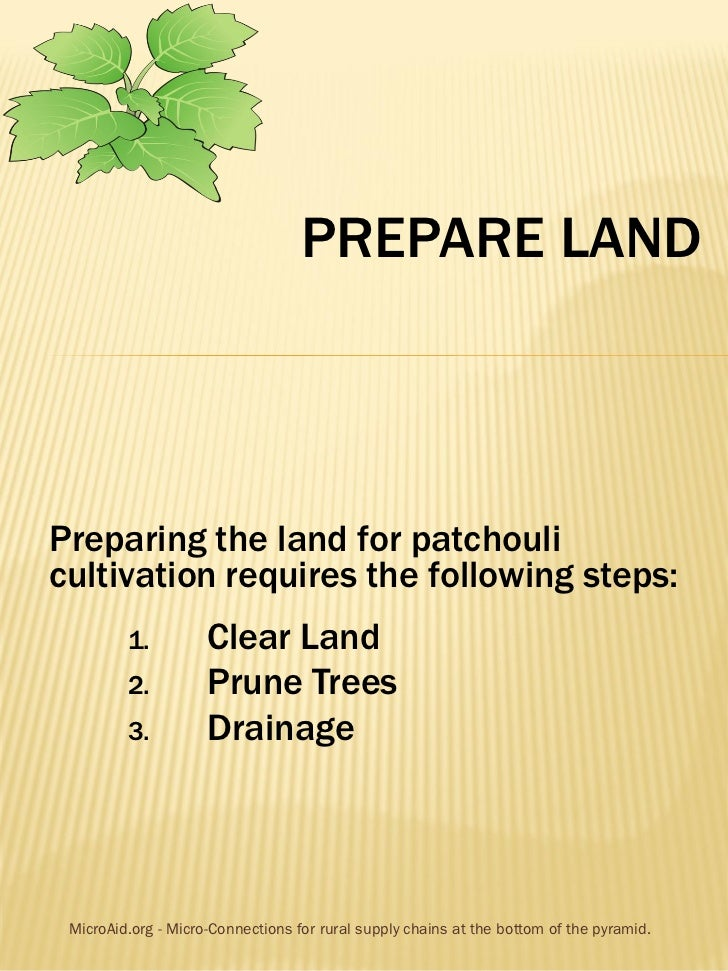 PREPARE LANDPreparing the land for patchoulicultivation requires the following steps:         1.          Clear Land      ...