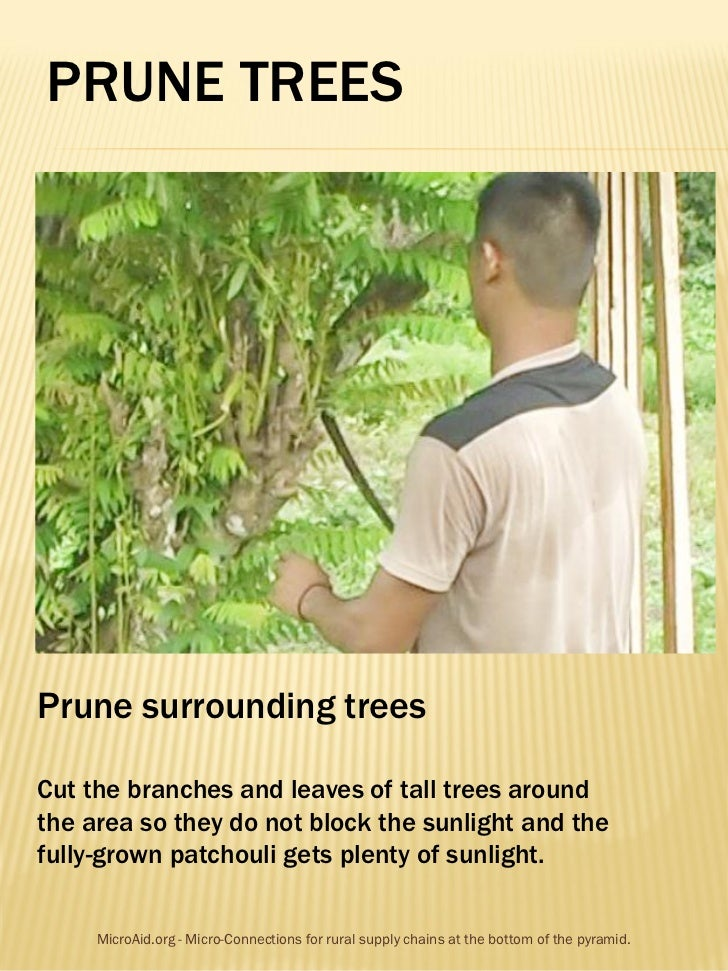 PRUNE TREESPrune surrounding treesCut the branches and leaves of tall trees aroundthe area so they do not block the sunlig...