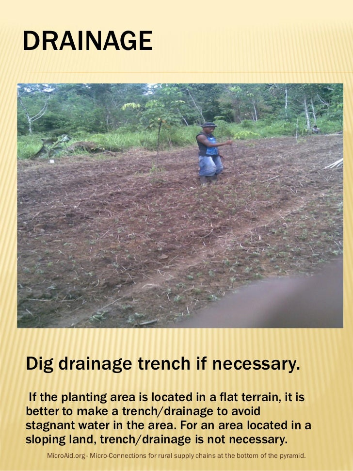 DRAINAGEDig drainage trench if necessary. If the planting area is located in a flat terrain, it isbetter to make a trench/...