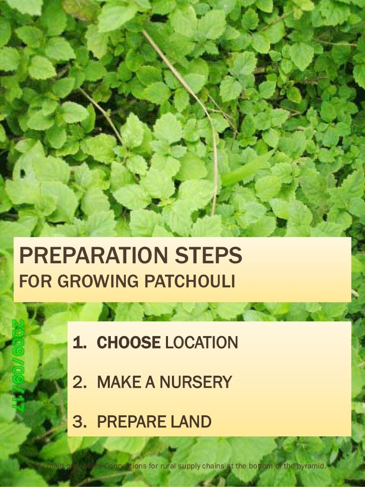 PREPARATION STEPSFOR GROWING PATCHOULI            1. CHOOSE LOCATION            2. MAKE A NURSERY            3. PREPARE LA...