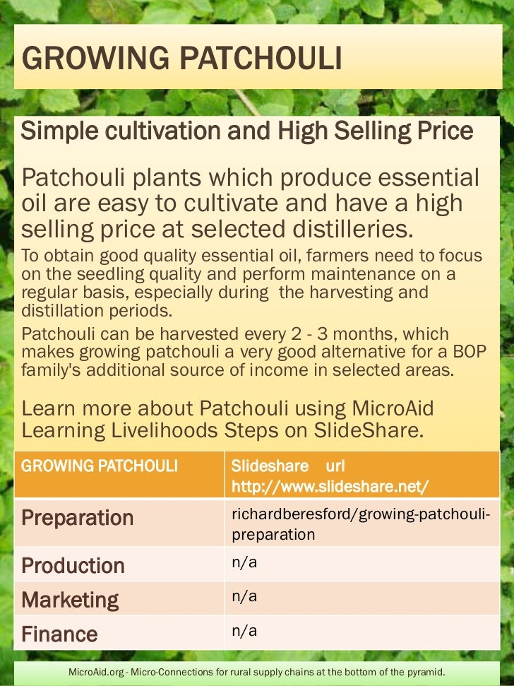 GROWING PATCHOULISimple cultivation and High Selling PricePatchouli plants which produce essentialoil are easy to cultivat...