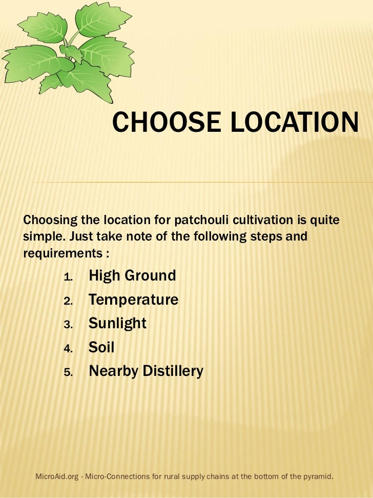 CHOOSE LOCATIONChoosing the location for patchouli cultivation is quitesimple. Just take note of the following steps andre...