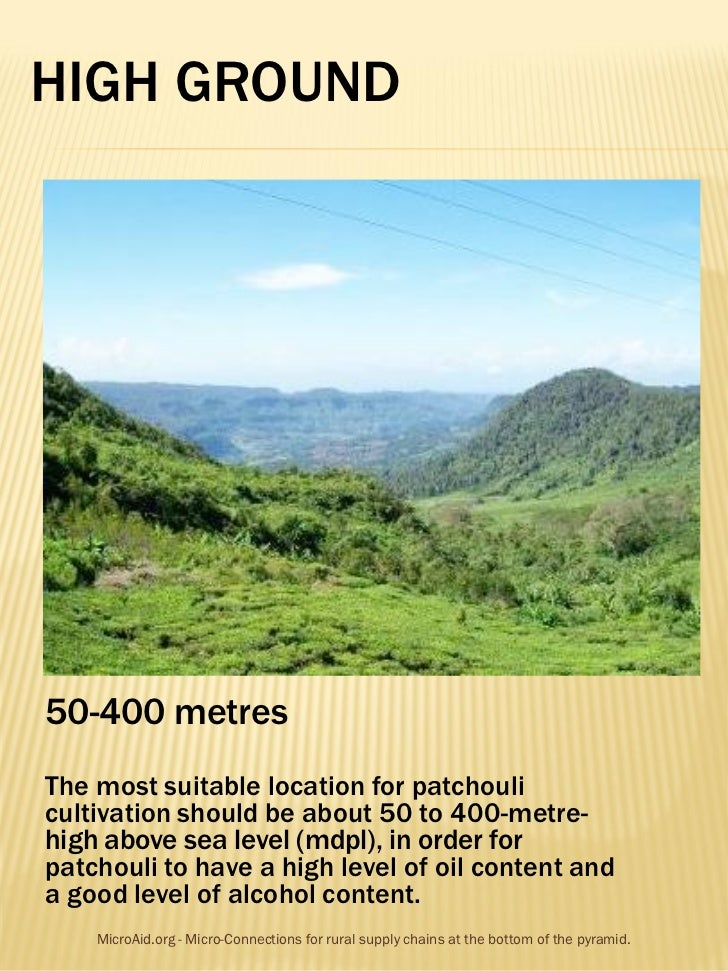 HIGH GROUND50-400 metresThe most suitable location for patchoulicultivation should be about 50 to 400-metre-high above sea...