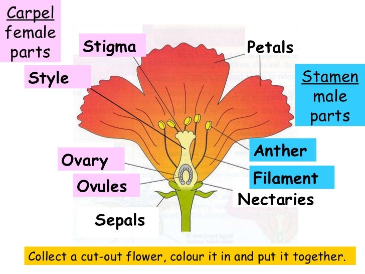 Rose Flower With Labeled Parts Diagram Wiring Diagram For Light