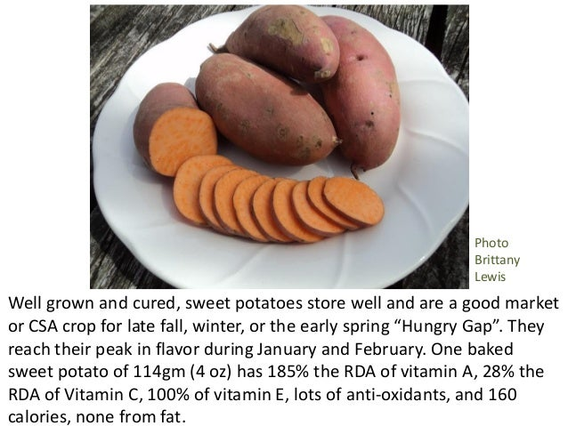 Twin Oaks Community Gardens; 4. Well grown and cured sweet potatoes store ...  sc 1 st  SlideShare & Growing sweet potatoes from start to finish Pam Dawling 2016