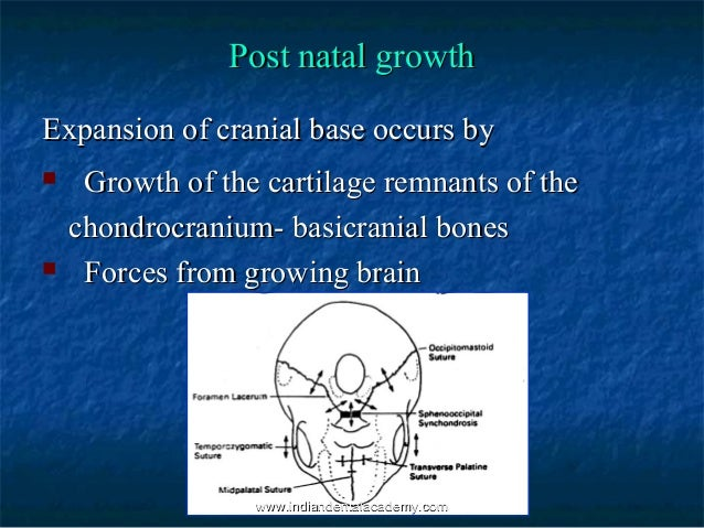 Growth Development Of Cranial Vault Base Fixed Orthodontic Co The cranial base synchondroses are important growth centers of the craniofacial skeleton. growth development of cranial vault
