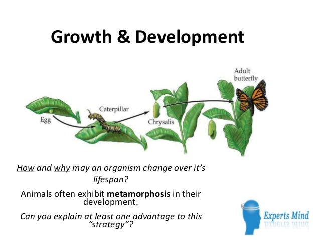 Growth & DevelopmentHow and why may an organism change over it's                   lifespan? Animals often exhibit metamor...
