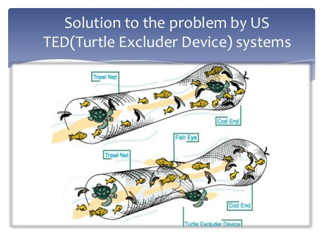 the description of turtle excluder device ted May 5, 2015 draft turtle excluder device (ted) compliance policy background the april 18, 2014, biological opinion is the current endangered species act (esa) authorization for the.