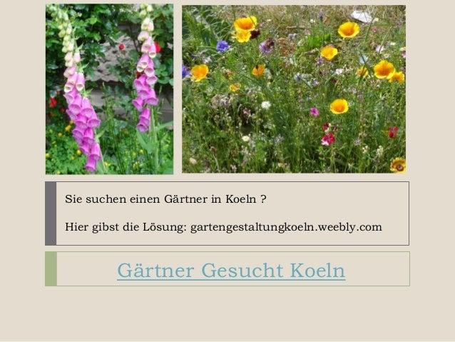 Sie suchen einen Gärtner in Koeln ? Hier gibst die Lösung: gartengestaltungkoeln.weebly.com Gärtner Gesucht Koeln