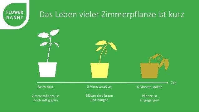 Jede Pflanze braucht individuelle Pflege  Hätte ich sie  düngen  müssen?  Habe ich sie  zu viel  gegossen?