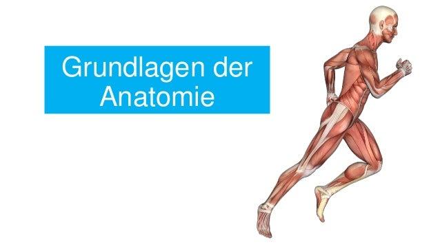 Grundlagen der anatomie for Grundlagen der tragwerklehre 1