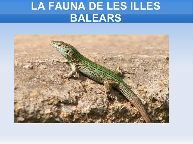 LA FAUNA DE LES ILLES BALEARS
