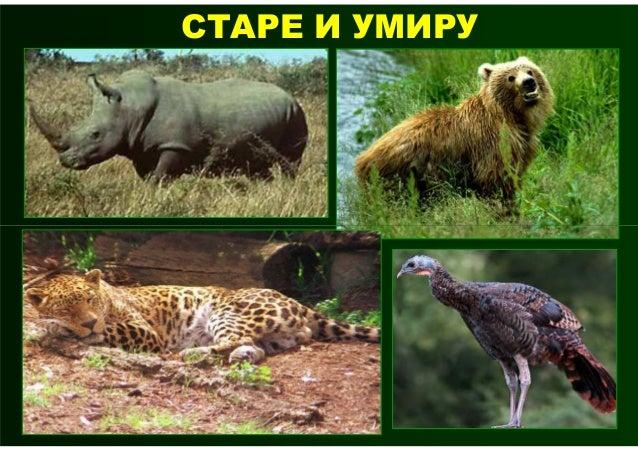 На свету постоји више од милионврста животиња. Неке од њих су огромне, а неке су веома ситне.     разврставамо на групе.