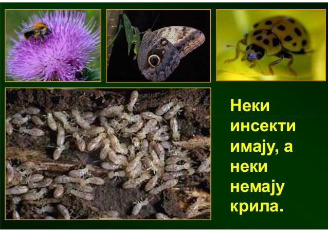 Grupe zivotinja
