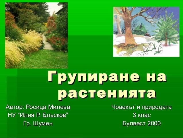 """Групиране на             растениятаАвтор: Росица Милева   Човекът и природатаНУ """"Илия Р. Блъсков""""         3 клас      Гр. ..."""