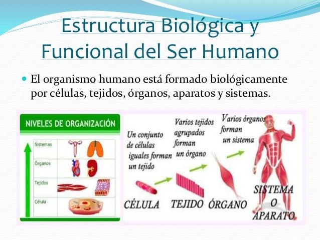 Estructura Biológica Y Funcional Del Ser Humano