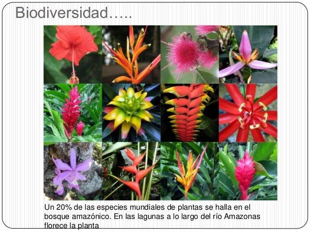 Grupo 2 Importancia Del Amazonas