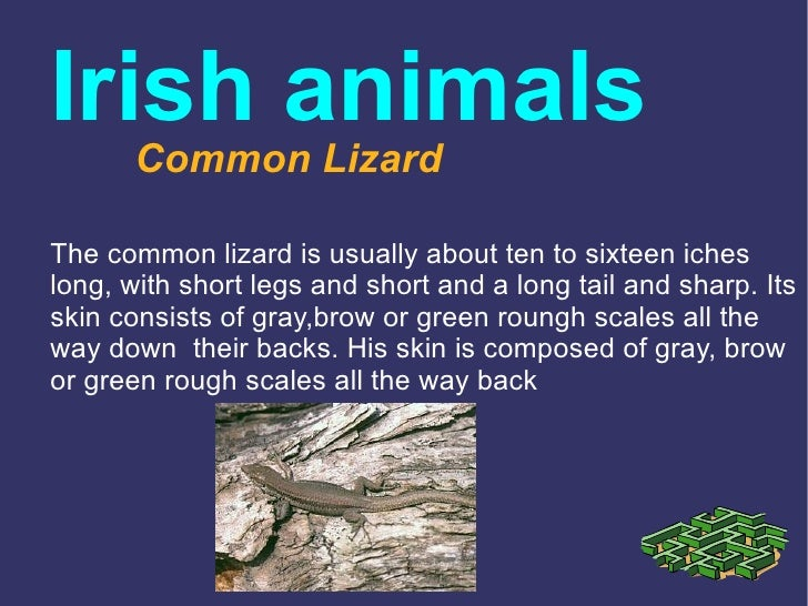 Irish animals       Common LizardThe common lizard is usually about ten to sixteen icheslong, with short legs and short an...